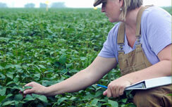 A woman in a hat, purple shirt, and khaki overalls is kneeling down while holding a white binder using her right hand to touch and feel the leaves of green crops in a field