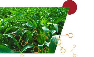 An image of green crops with an orange hexagon pattern overlaid and a maroon circle in the top right corner