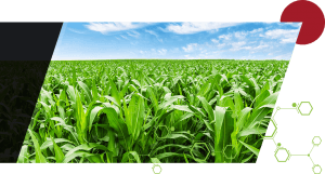 Green crops with a light green molecule pattern overlaid and a maroon circle positioned at the top right corner of the crop image