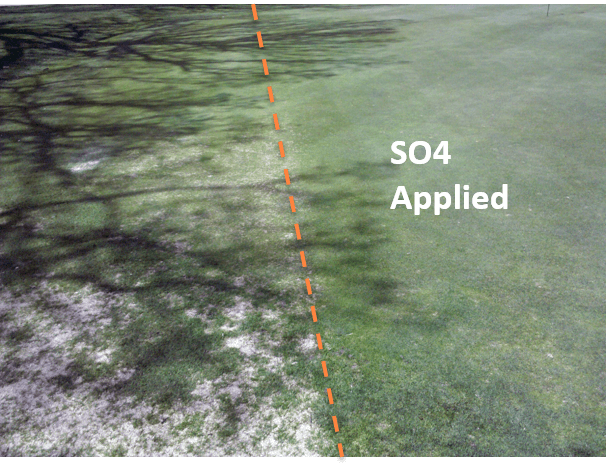 Minimize Snow Mold Damage
