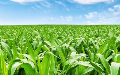 Precision Planting: Inside PTI – Sulfur Management with SO4
