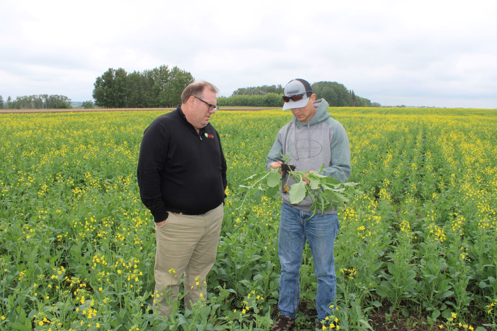 The Impact of Soil pH on Canola Club Root