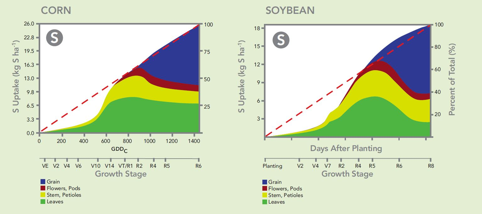 Sulfur Needs of Corn and Soybeans