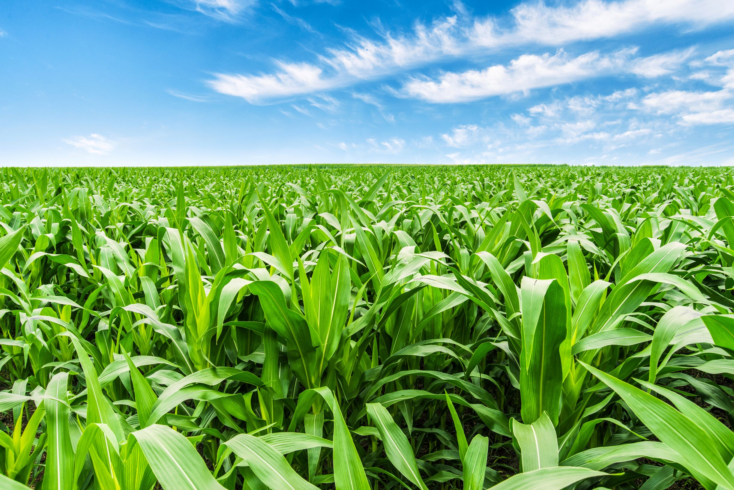 Maximizing yield potential: A solution for all soil types